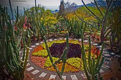 Kakteen im Botanischen Garten in Funchal Madeira