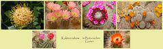 Kakteenshow im Botanischen Garten als Collage von Bild 1-6