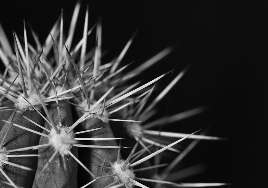 Kaktus 1 SW