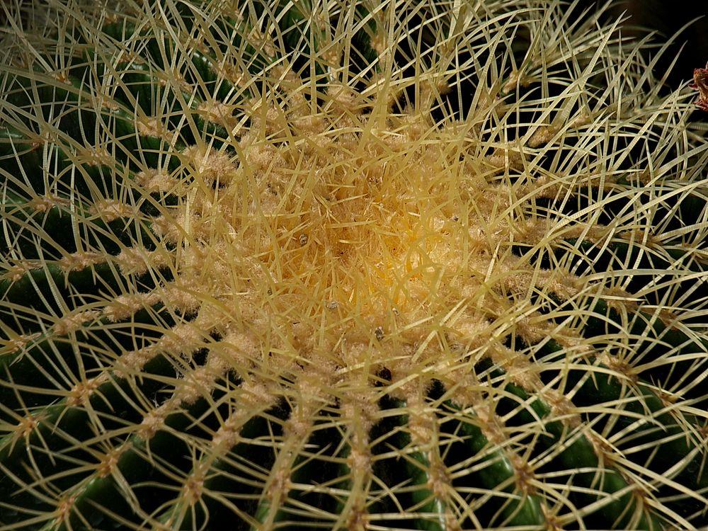 Kaktus, einmal aus der Nähe