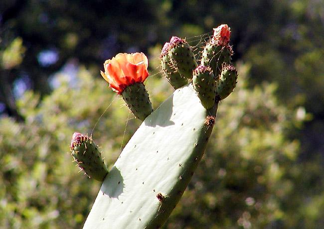 Kaktus im Netz
