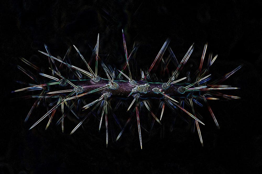 Kaktus in einem etwas anderen Licht