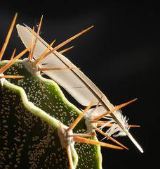 Kaktus mit Feder