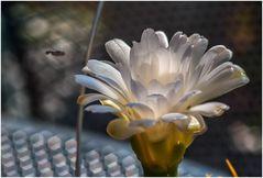 Kaktus mit Fliege