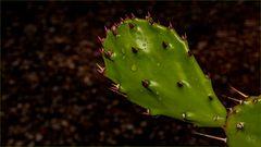 Kaktus nach dem Regen