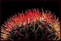 Kaktus nach Hair-Styling