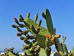 Kaktus - Skulptur