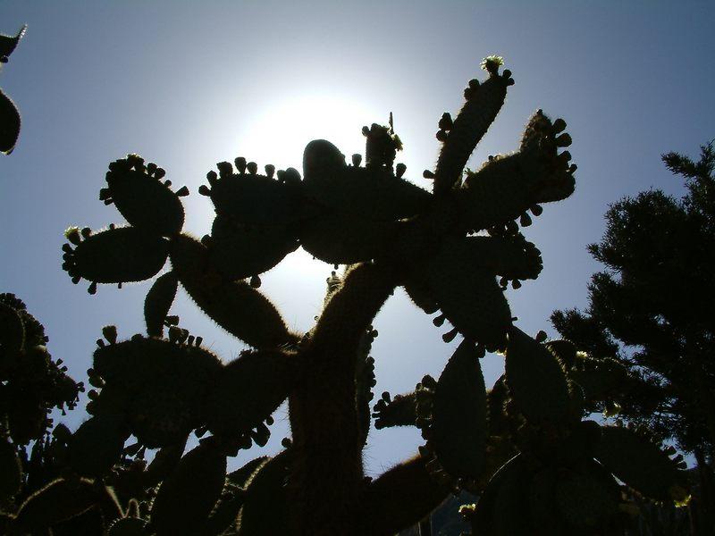 Kaktus vor der Sonne Gran Canarias