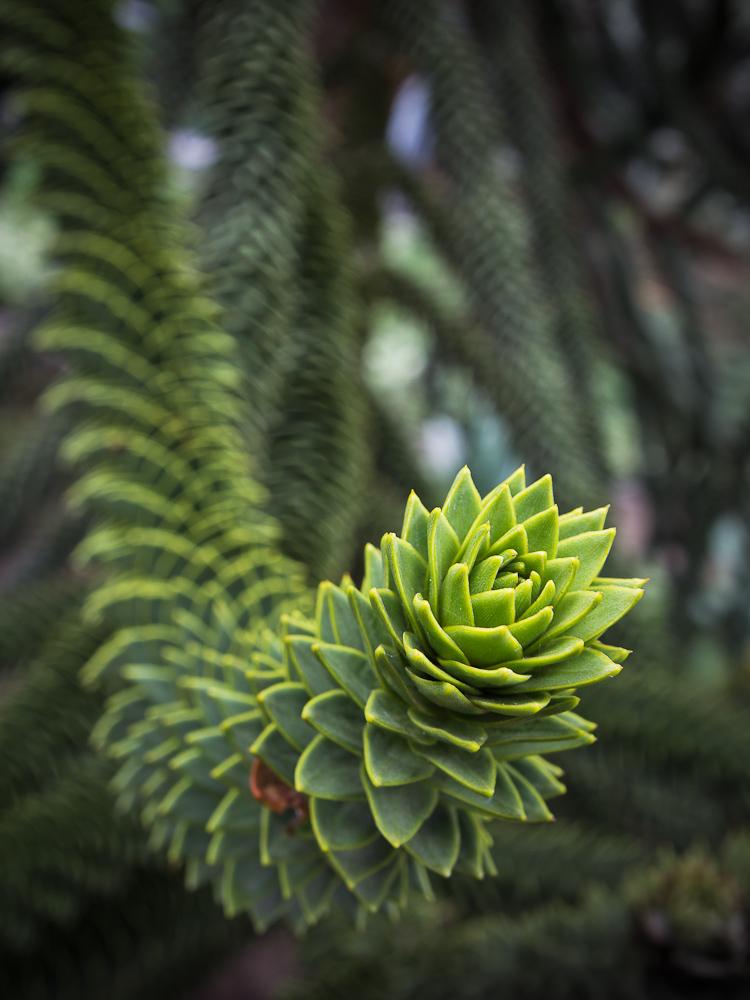 Kaktusbaum