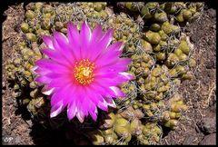 """Kaktusgarten """"Palmex"""""""