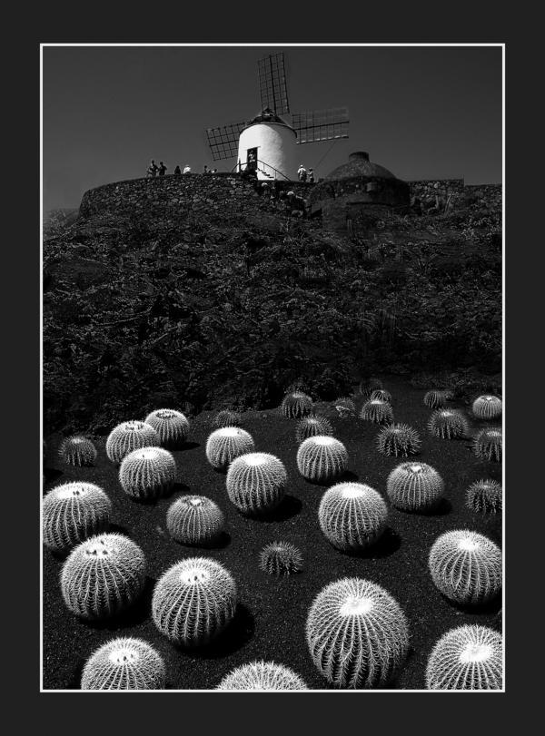 Kaktusgarten v. Cäsar Manrique