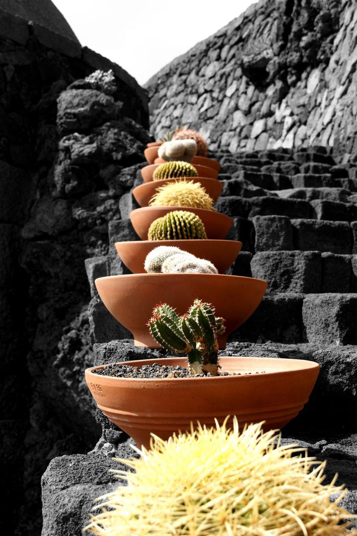 Kaktustöpfe