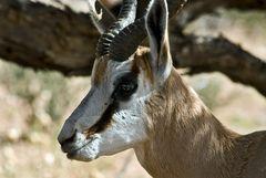 Kalahari 10