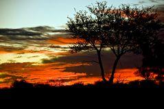 Kalahari 4