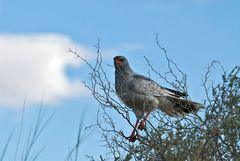 Kalahari 5
