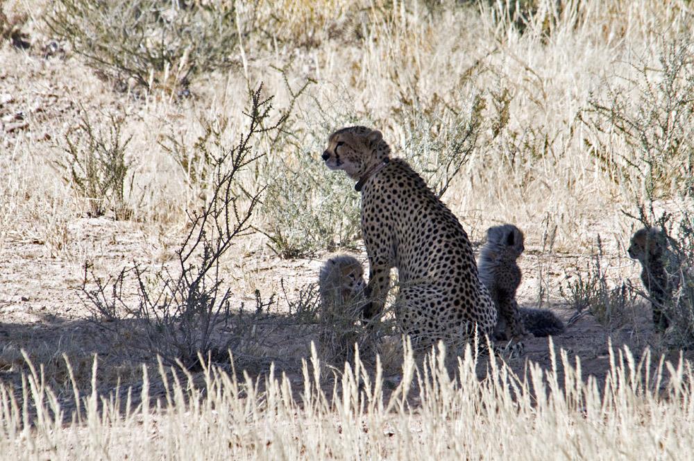 Kalahari 53