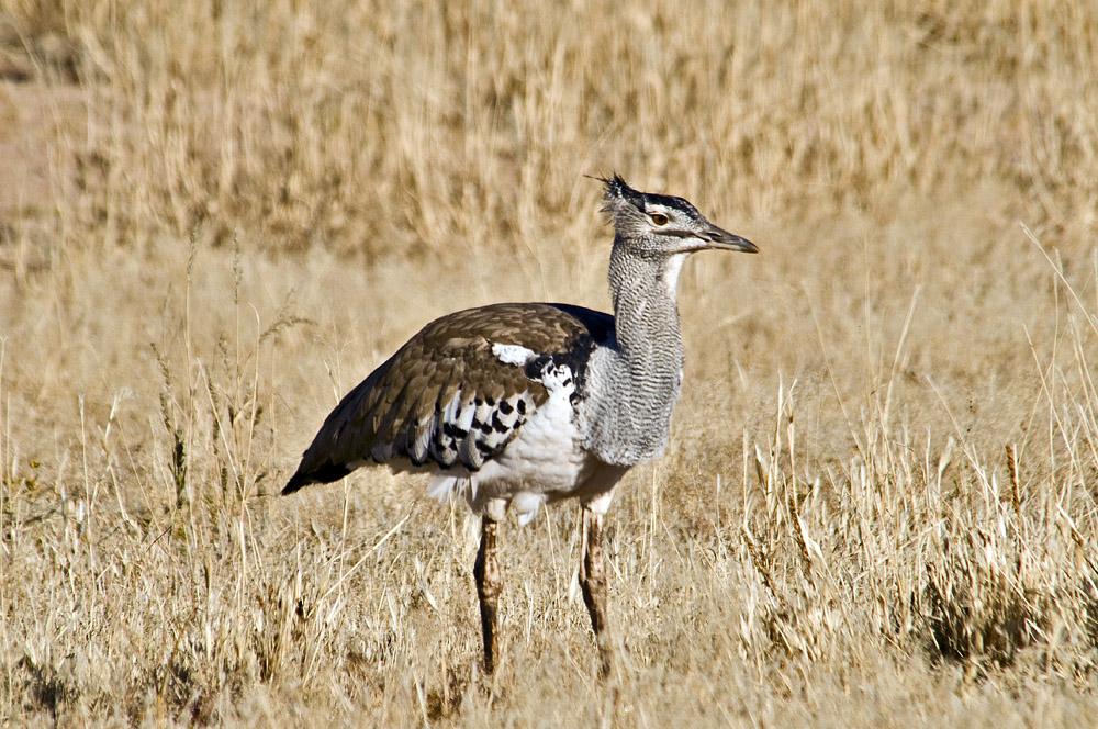Kalahari 59