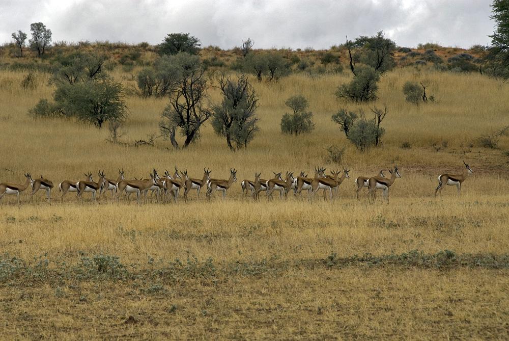Kalahari 72