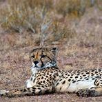 Kalahari 84
