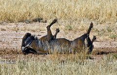 Kalahari 9