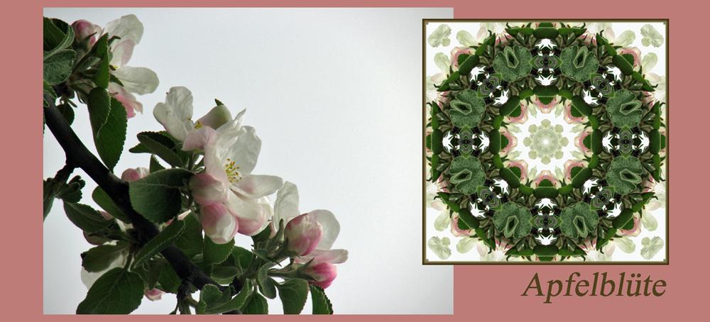 Kaleidoskop Apfelblüte