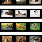 """Kalender """"Dorfkatzen 2011"""""""