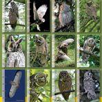Kalender WALDOHREULEN 2014 / Übersicht