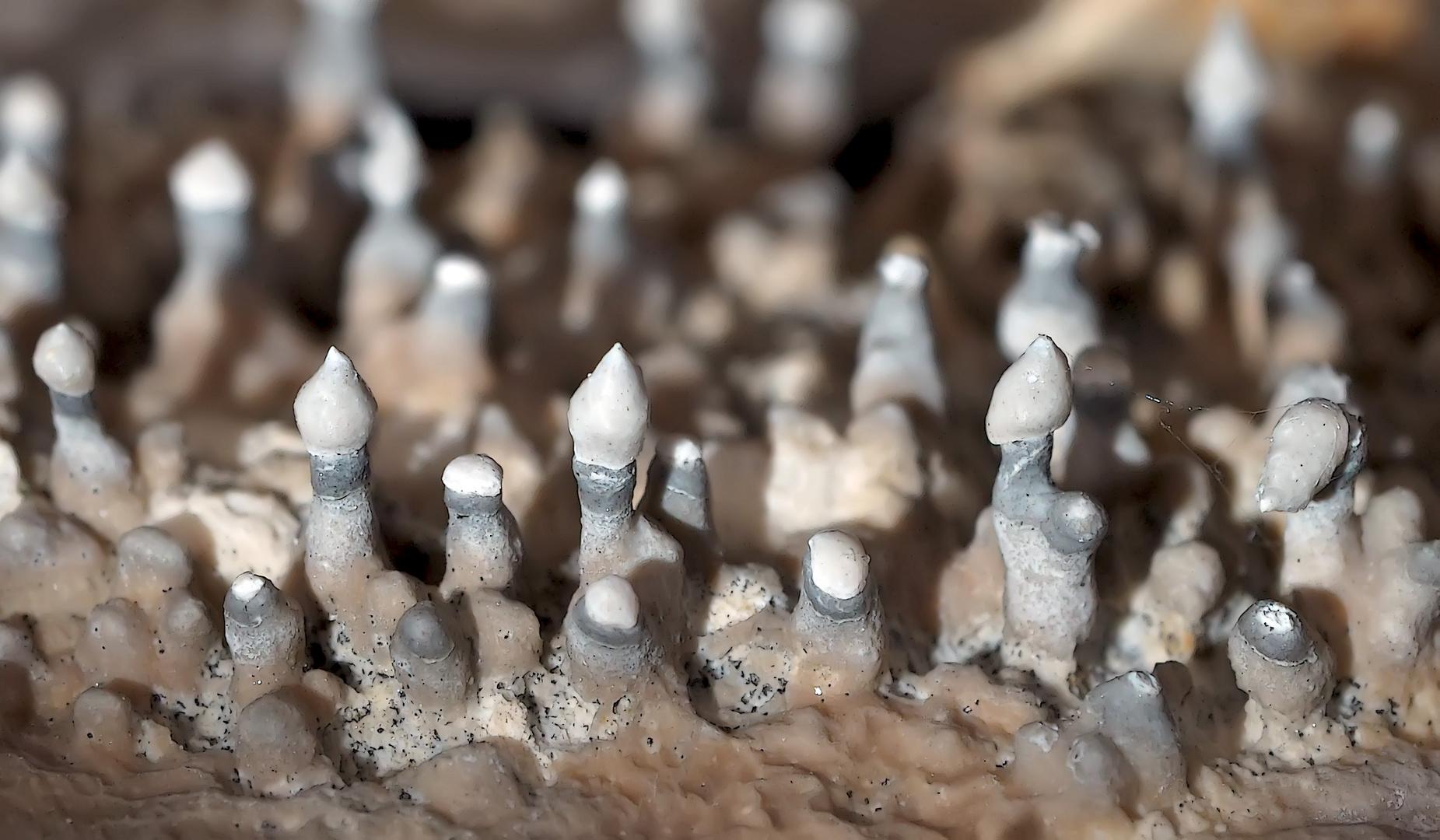 Kalkhaltige Mini-Ablagerungen auf Felswand. (1. Foto) - Dépôts calcaires sur une paroi rocheuse