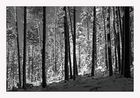 Kalt im Wald 2