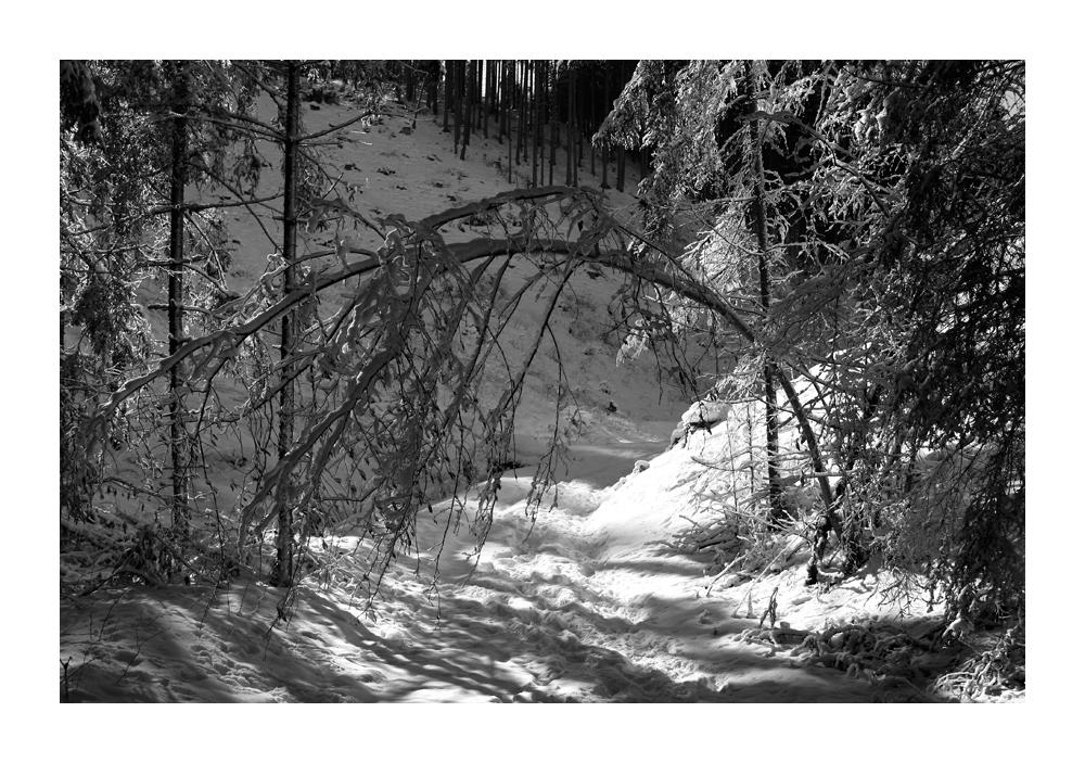 Kalt im Wald 3
