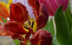Kalt ist der Blumen Tod