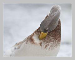 Kalte Ente
