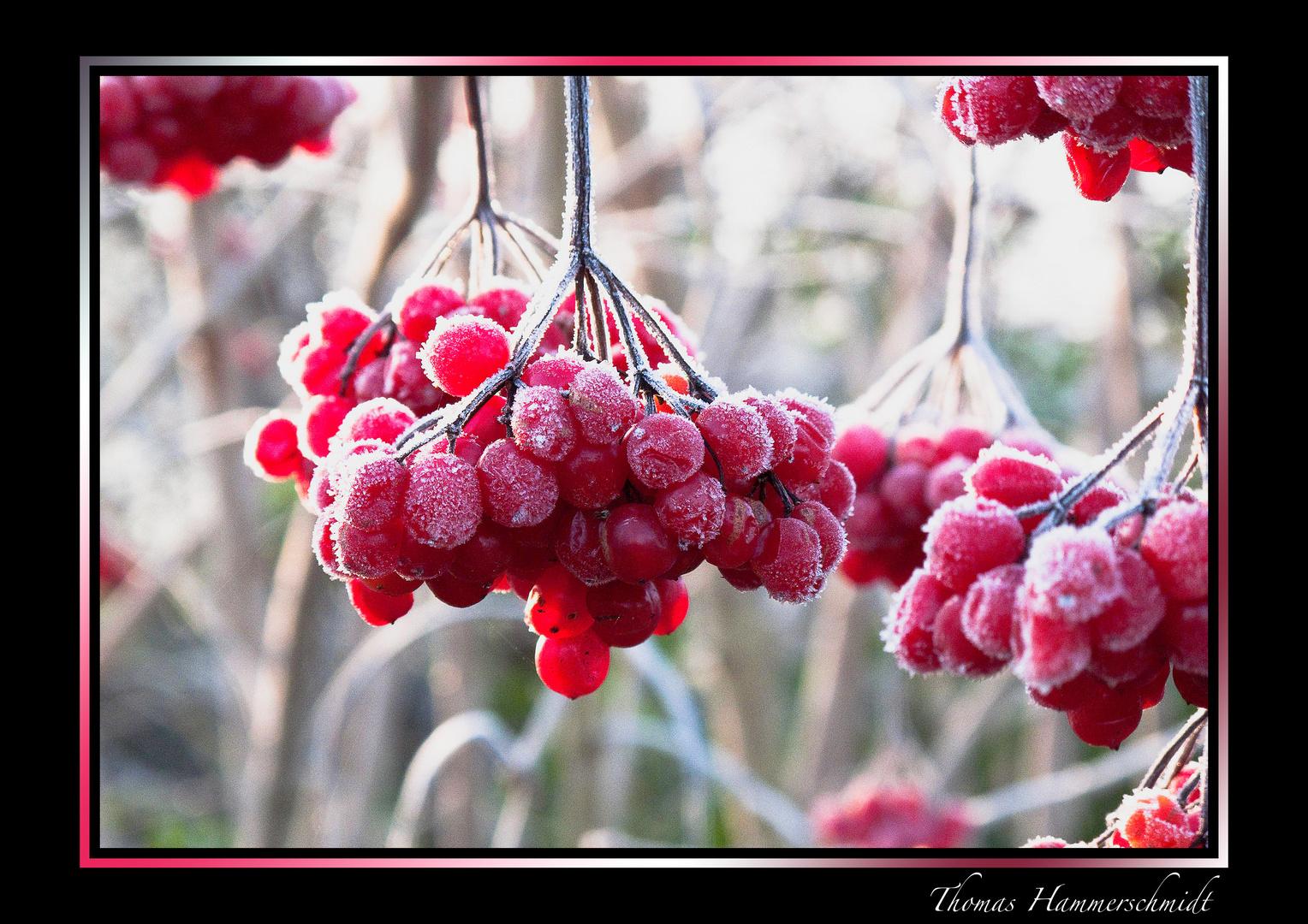 Kalte Früchte