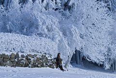 Kalte Jahreszeit- wärmender Anblick
