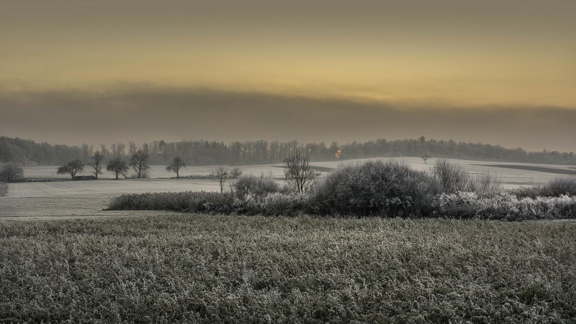 Kalte Sonne im Januar