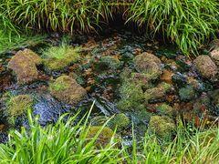 Kaltenbach mit Steinen und Gras