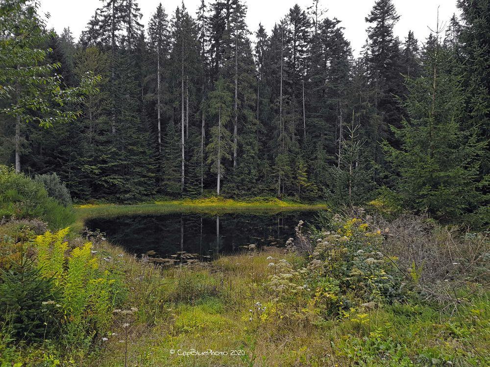 Kaltenbachsee mit Wald im Hintergrund