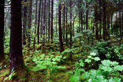 Kalter Regenwald