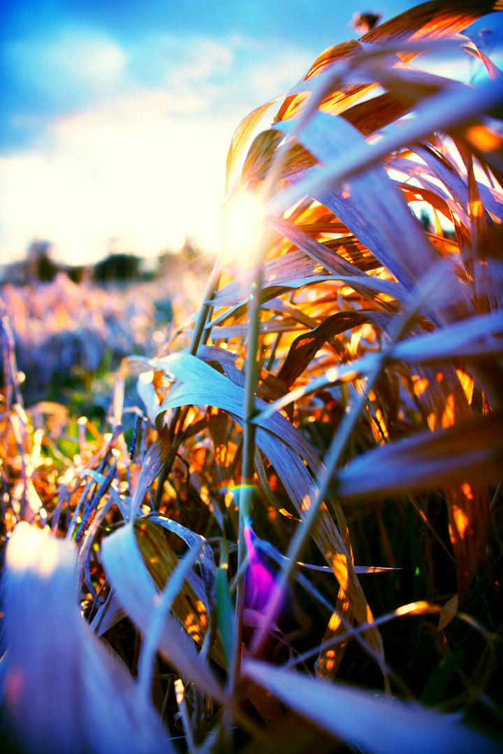 Kaltes Gras