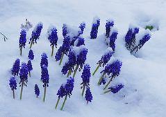 Kaltes Mittwochsblümchen