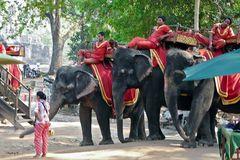 Kambodscha - Angkor - 2011 - Elefanten für Besucher der Anlagen