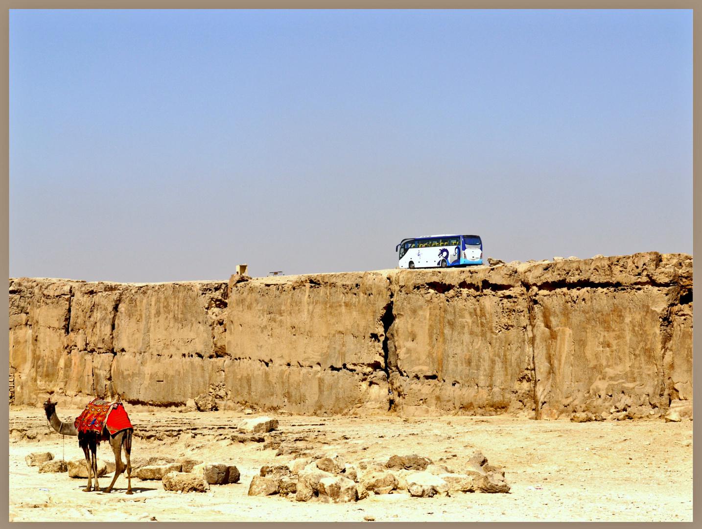 Kamel gegen Bus