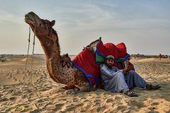 Kamel in der Wüste Thar