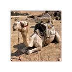 Kamel-Quadratur, ägyptisch