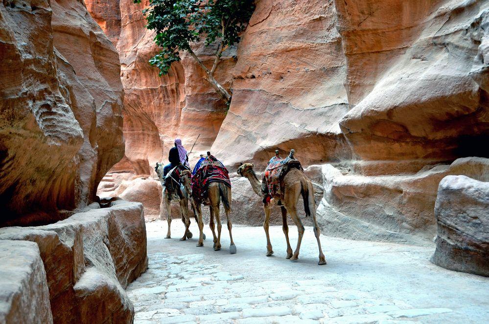 Kamele im großen Siq von Petra