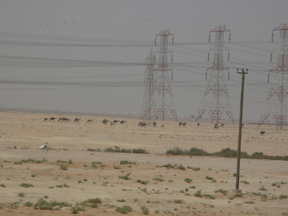 Kamele im zweiStromland