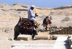 Kamelreiter bei der Pyramide von Sakkara