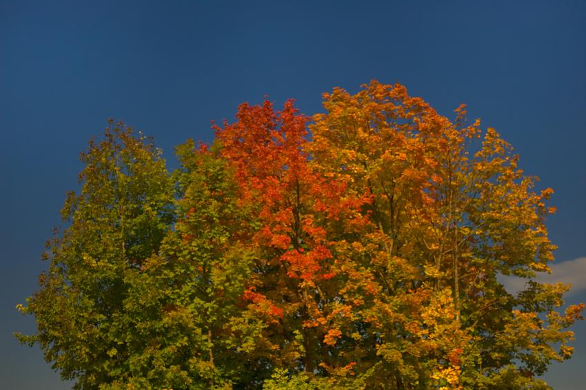 Kamera herrichten - der Herbst ist da !