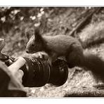 Kamerageiles Hörnchen