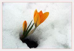 Kampf zwischen Winter und Frühling